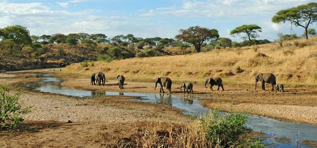 Tanzania schlägt Alarm – Tierarten durch Wilderer bedroht