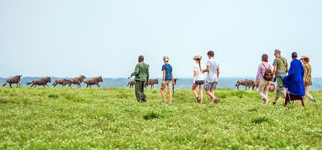 Besuch einer Reisegruppe in der Serengeti