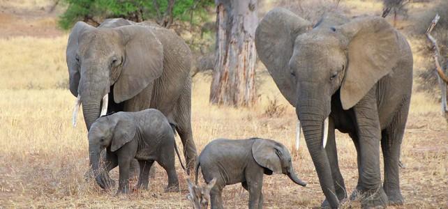 Bericht zu einer Tanzania Naturreise