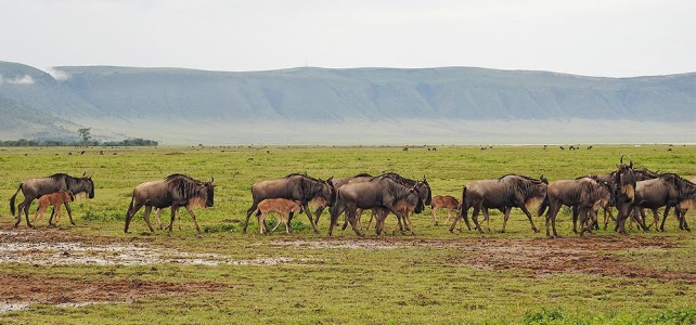 Neue Fusssafari in der Serengeti