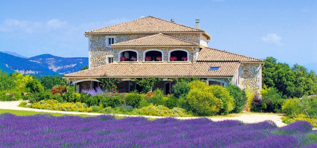Lavendel die schönste Farbe des Sommers
