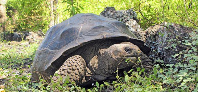 Aktivferien und Galapagos Nationalpark starten gemeinsam ein neues Projekt