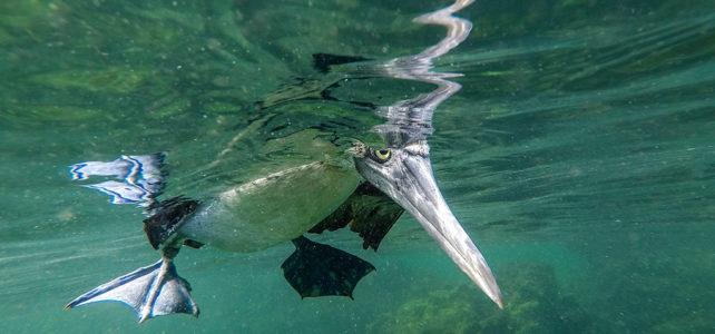 Galapagos, das Naturparadies in Bildern