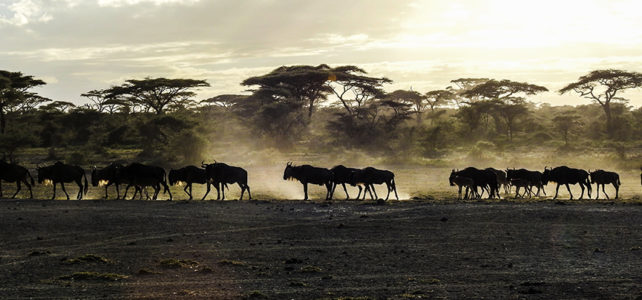 Pionierarbeit in der Serengeti