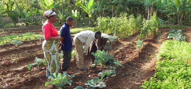 Besuch im Kilimanjaro Farmhouse