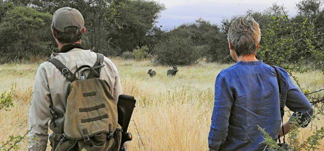 Auf Entdeckung für neue Fusssafaris