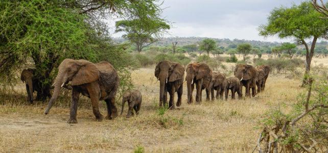 Reiseleiter Michael Scharenberg berichtet von der Tanzania Naturreise