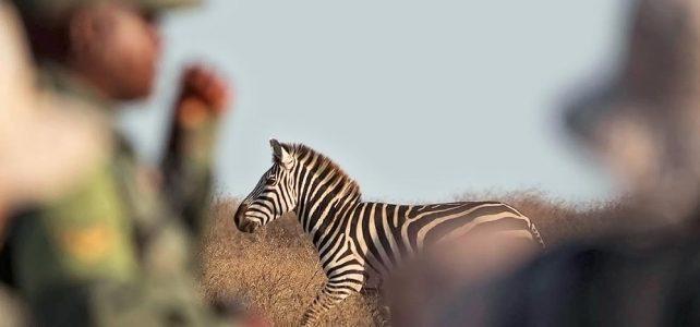 Exklusive Fuss-Safari in den Nationalparks Tanzanias
