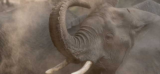 Fuss-Safari in Tanzania, ein Erlebnis für alle Sinne!