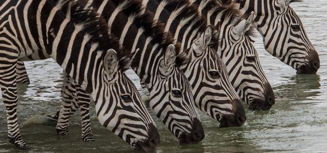 Reiseleiterin Carina Büchi berichtet von der Tanzania Naturreise