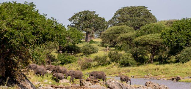 Zweite Tanzania Reise von Nadège Gillioz
