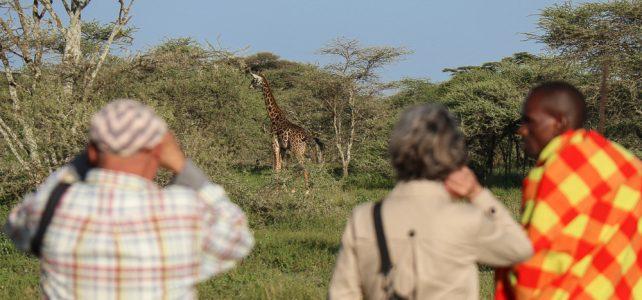 Das Murmeltier und die kleine Wanderherde in Tansania