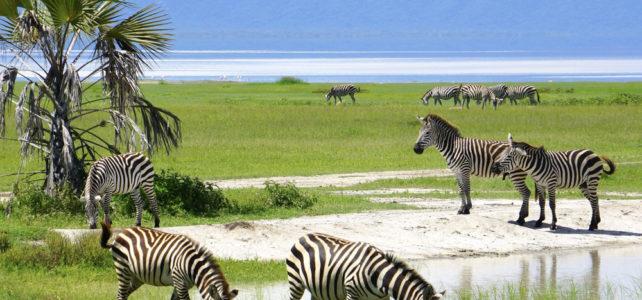 Unterwegs auf der Tanzania Naturreise